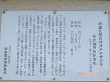 26_oyamadoc