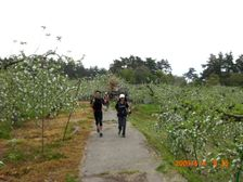19_apple