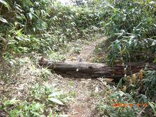 35_trail