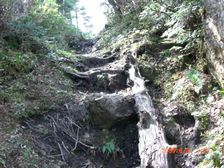 37_trail