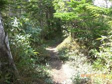 38_trail