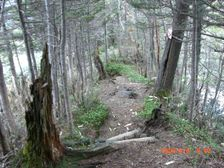 54_trail