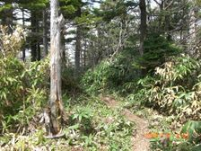 58_trail