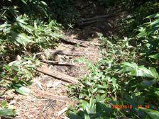 68_trail
