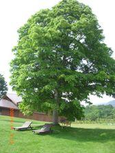 33_tree