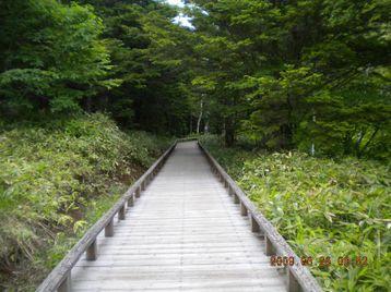 028_wood