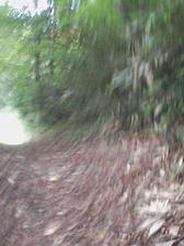 17_trail