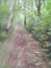 18_trail