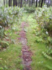56_trail