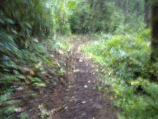 02_trail