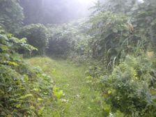 25_trail