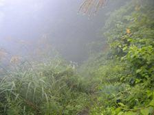 31_trail