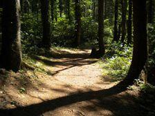 10_trail