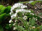 20_flower