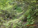 36_trail