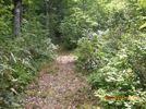 40_trail