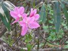 41_flower