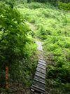 46_trail
