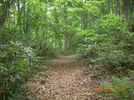47_trail_2