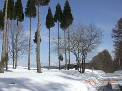 46_snow